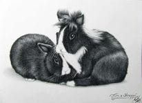 Kaninchen, Zwergkaninchen, Fell, Haustier