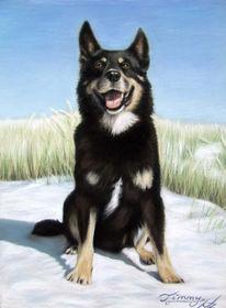Tiere, Portrait, Hund, Tiermalerei