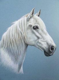 Pferde, Hengst, Weiß, Pastellmalerei