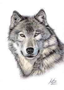 Tierportrait, Tiere, Portrait, Zeichnung