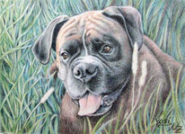 Hund, Tiermalerei, Boxer, Portrait