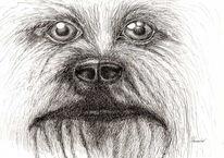 Federzeichnung, Ausschnitt, Hund, Portrait