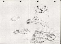 Tiere, Skizze, Karikatur, Federzeichnung