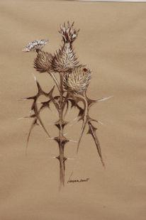 Grafik, Pflanzen, Zeichnung, Distel