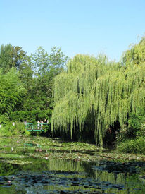 Landschaft, Fotografie, Grün, Garten