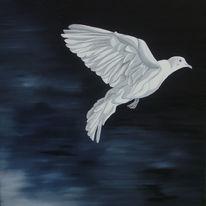 Weiß, Taube, Schwaz, Nacht
