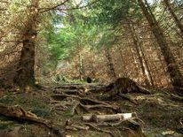 Grün, Unterholz, Wald, Fotografie