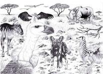 Zeichnung, Tiere, Afrika, Zeichnungen