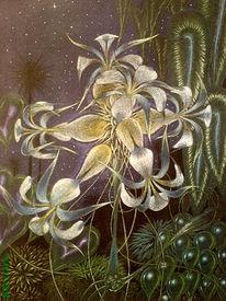 Dsungel, Blumen, Psychedelisch, Nacht