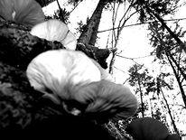 Fotografie, Schwarzweiß, Landschaft, Baum
