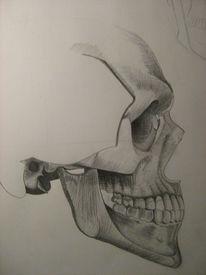 Menschenschädel, Zeichnung, Bleistiftzeichnung, Schraffur