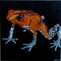 Whitefooted, Frosch, Dendrobates, Histrionicus