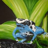 Frosch, Tiere, Dendrobates, Oyapok