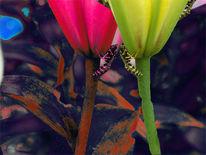 Digital, Blumen, Wespe, Landschaft