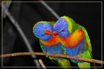 Vogel, Papagei, Bunt, Reiseimpressionen