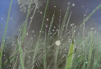 Gras, Lichtstrahlen, Tau, Stimmung