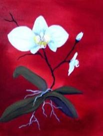 Blumen, Rot, Stillleben, Orchidee