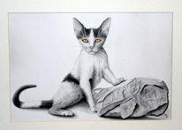 Zeichnung, Katze, Surreal, Zeichnungen