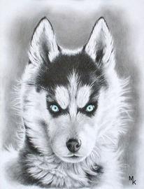 Husky, Hund, Zeichnungen, Surreal