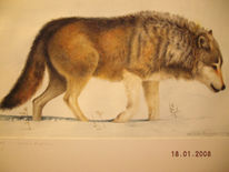 Illustration, Wolf, Malerei, Tiere
