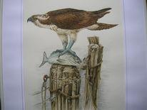 Vogel, Fisch, Fischadler, Malerei