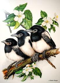 Vogel, Elster, Junge elstern, Aquarell
