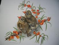 Goldhähnchen, Vogel, Malerei, Tiere