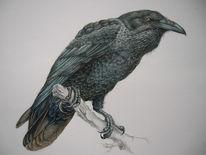 Kolkrabe, Vogel, Malerei, Tiere