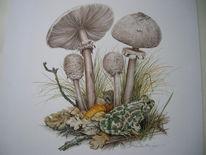 Biologie, Kröte, Pilze, Malerei