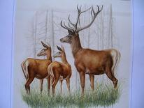 Rotwild, Tiere, Malerei