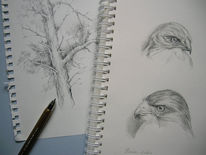 Bleistiftzeichnung, Skizze, Baum, Naturskizzen