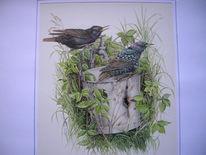Starren, Vogel, Malerei, Tiere