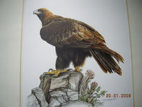 Steinadler, Illustration, Vogel, Malerei