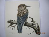 Tannehäher, Vogel, Malerei, Tiere