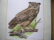Vogel, Uhu, Malerei, Tiere