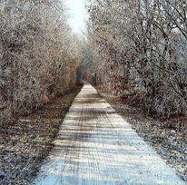 Baum, Landschaft, Fotografie, Weg