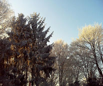 Fotografie, Karte, Baum, Landschaft