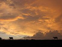 Schaf, Meer, Lebenslust, Fotografie