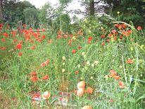 Mohnblumen, Liebe, Gras, Landschaft