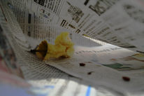 Natur, Zeitung, Fotografie, Stillleben