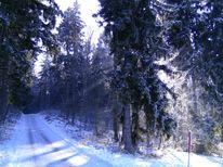 Fotografie, Landschaft, Winterwald