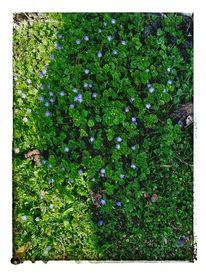 Frühling, Schatten, Blumen, Gefühl