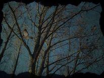 Fotografie, Landschaft, Natur, Geben