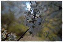 Baum, Natur, Wald, Äste