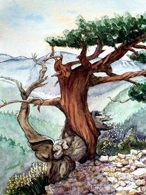 Baum, Gingilos, Kreta, Nadelbäume