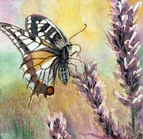Studie, Schwalbenschwanz, Aquarellmalerei, Schmetterling