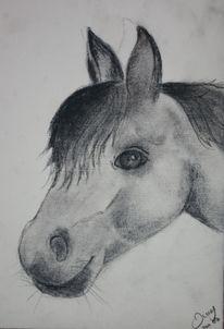 Kohlezeichnung, Portrait, Pony, Pferde