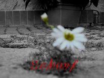 Grau, Gänseblümchen, Unschärfe, Maske