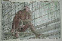 Zeichnungen, Berlin, Zoo