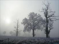 Nebel, Niederrhein, Winter, Fotografie